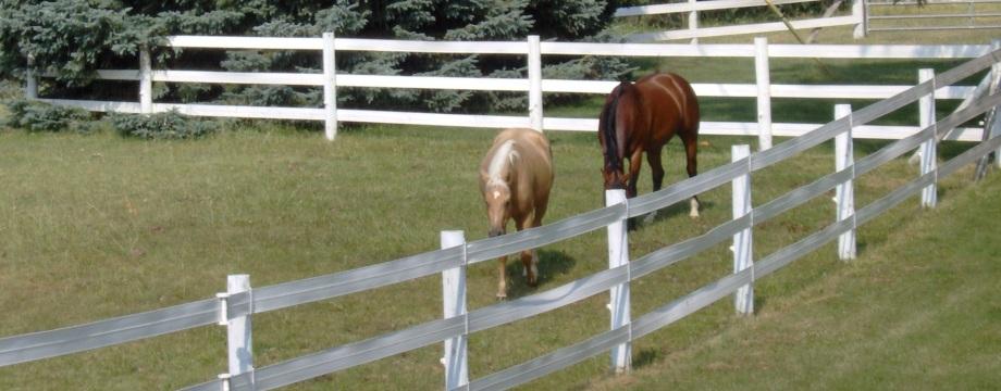 Horse Boarding | Firefly Farm LLC Mason MI