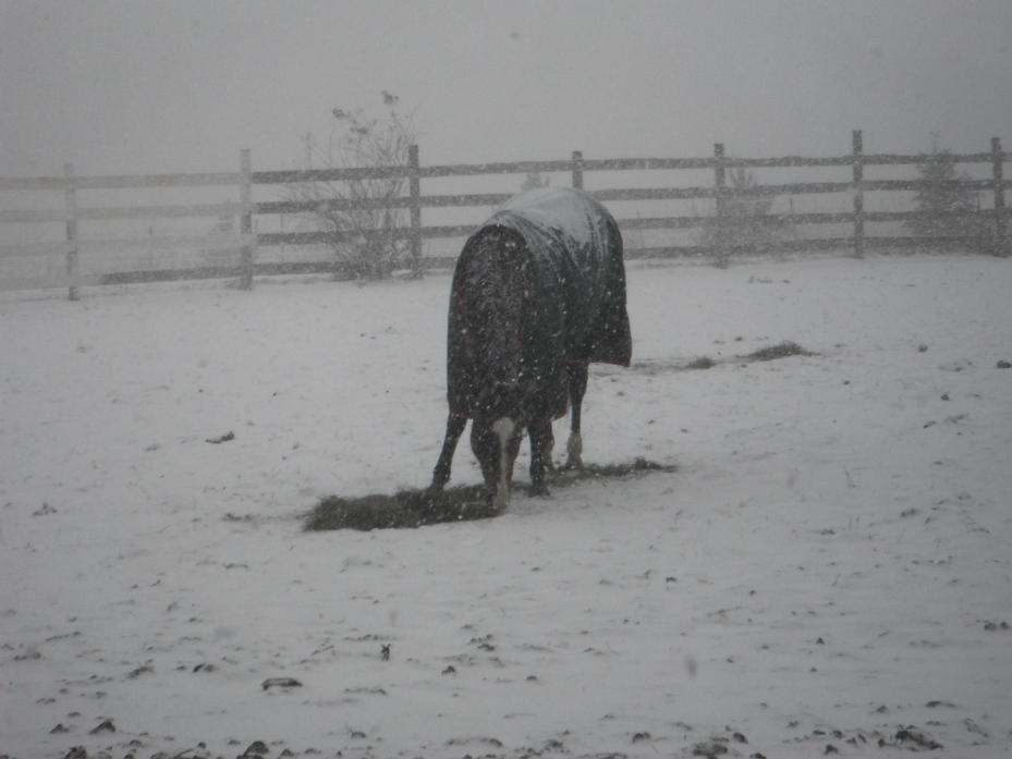 Mid January 2012 050