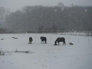Jan 31, 2012 023