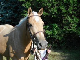Honey in a new bridle