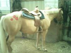 Honey as Applejack the My Little Pony