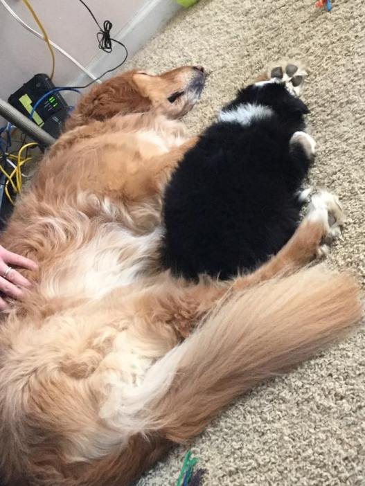 Bubbles and Lance Snuggle