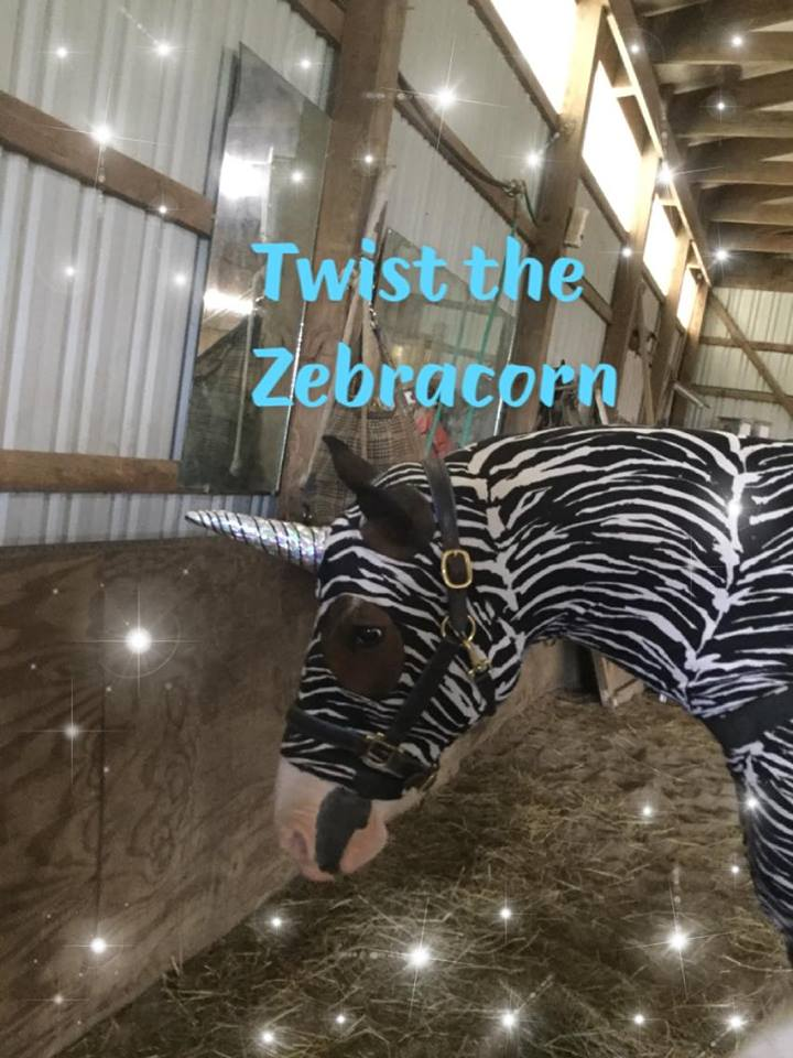Twist the Zebracorn